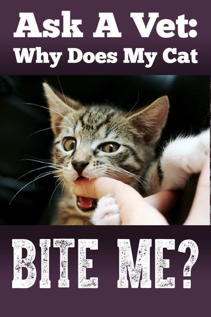 Pin On Cats