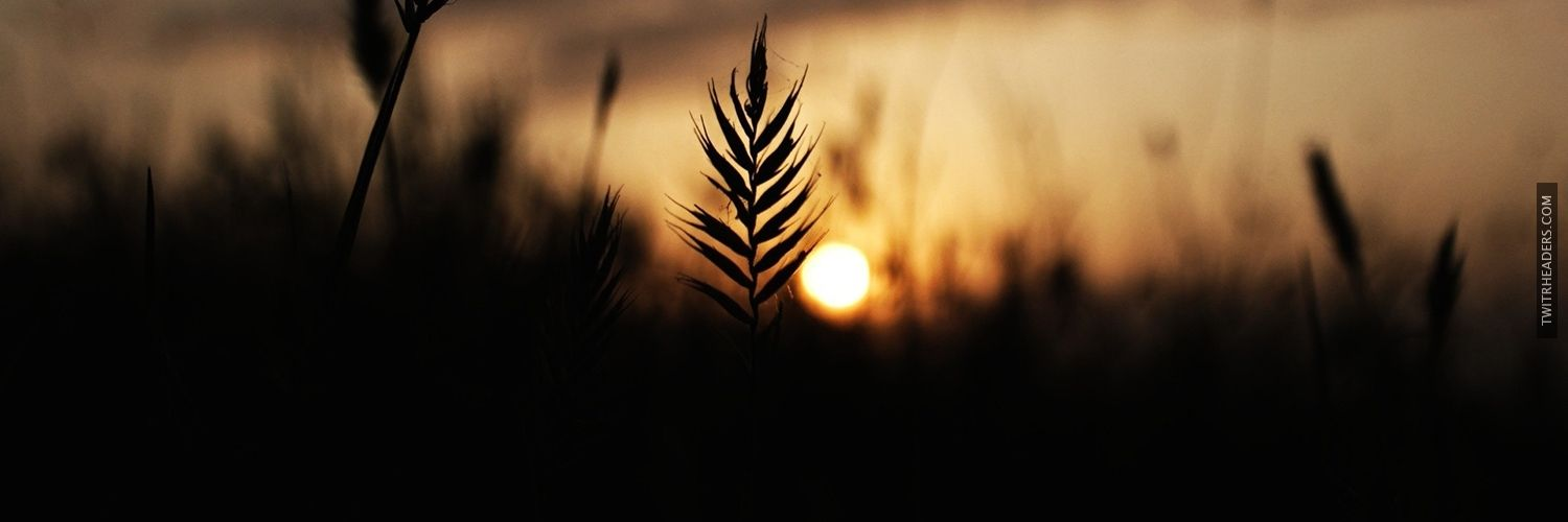 Wheat silhouette in the sunset Twitter Header Cover - TwitrHeaders ...