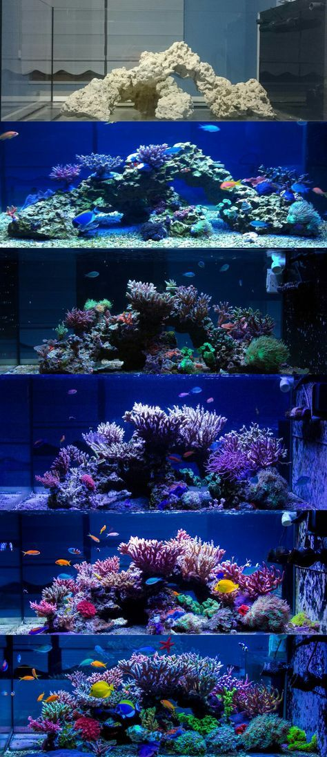 Progression Of A Reef Tank Saltwater Aquarium Fish Saltwater Aquarium Setup Saltwater Fish Tanks