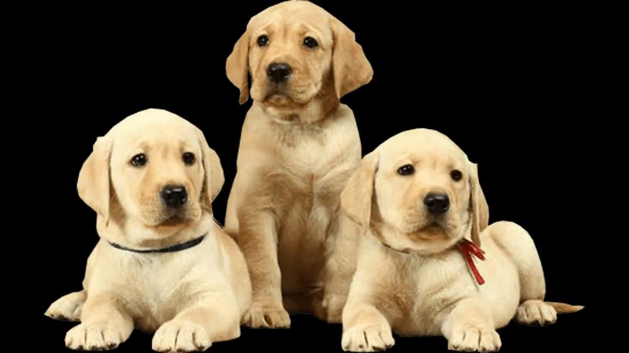 Dog Under 10000 Dog Price In India 2018 Dog Price List From 2000