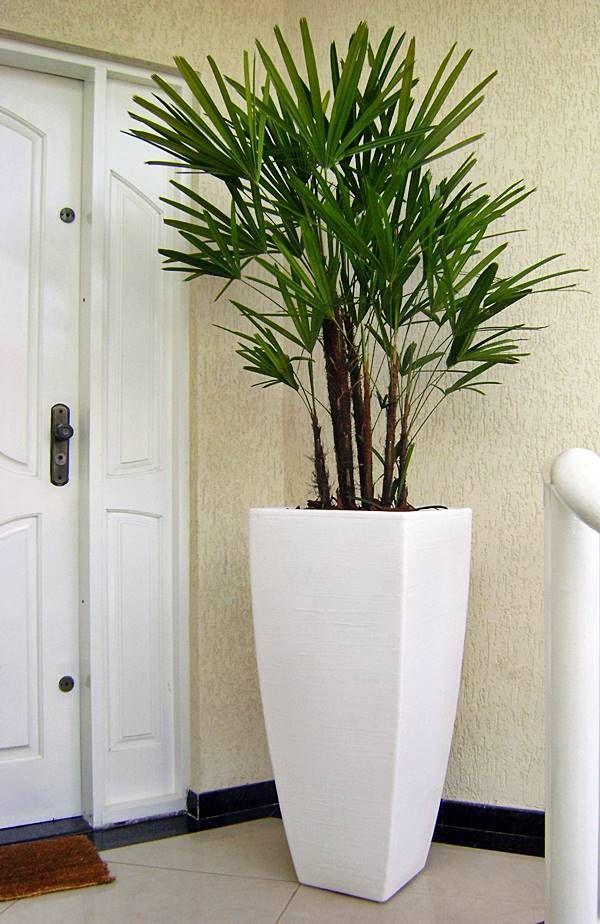 Plantas para melhorar a saúde da sua casa Plantas, Vasos y - decorar jarrones altos