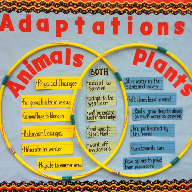 A Good Way To Compare And Contrast Animals And Plants Is To Use A