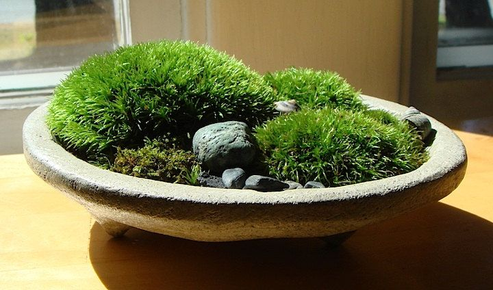 Zen Concrete Handmade Mini Moss Bowl Planter Home Decor Moss