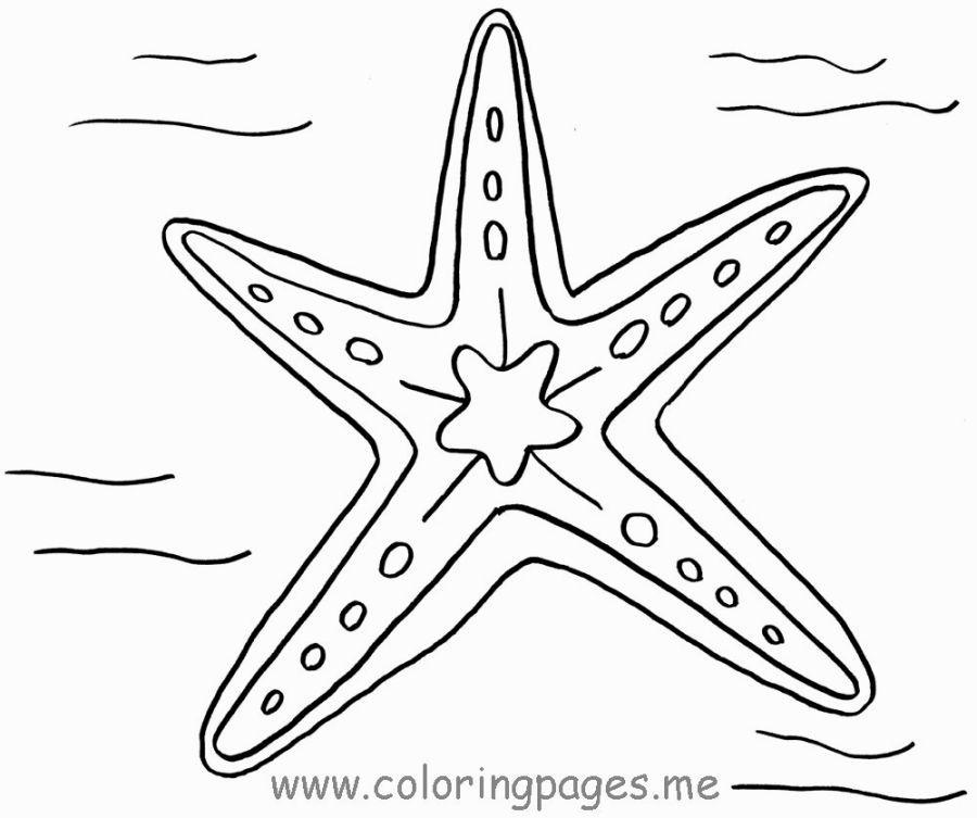 Starfish Coloring Page Dengan Gambar