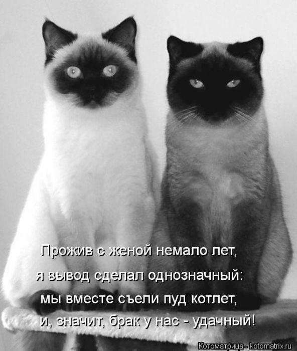 Белые картинки с кошками и надписями