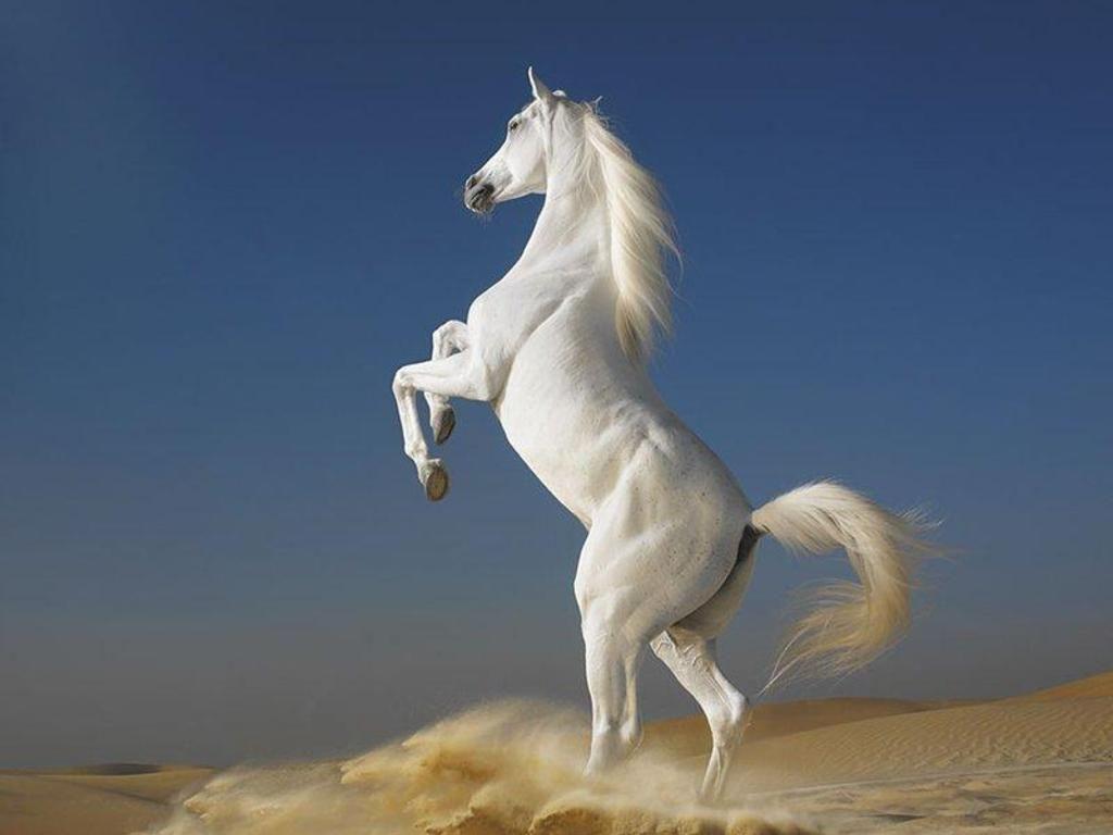 Must see Wallpaper Horse Spirit - 4d693a1866f45a20f65f1c2fc8e02fc1  HD_879888.jpg