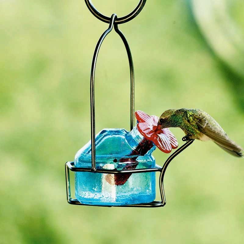 Que tal el bebedero para colibries, En camino silvestre en San ...
