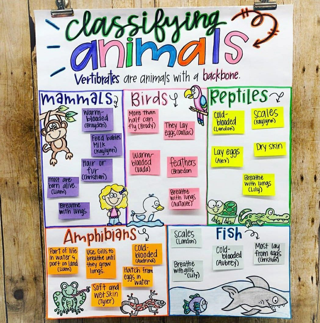 Pin By Cathryn Carson On 3rd Grade In With Images
