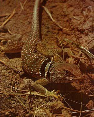 Sahara+Desert+Animals+and+Plants | desert survival desert animal ...