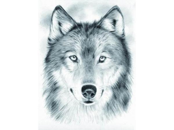 Image de loup dessin mammut 147002 dessin aux - Image loup dessin ...