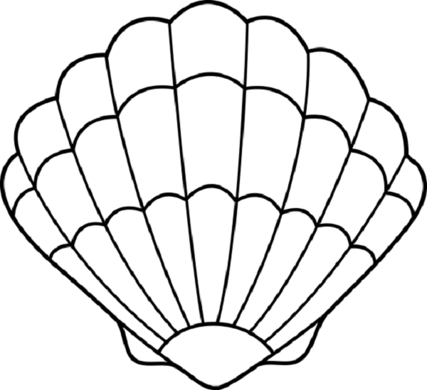 Clam Shell Coloring Pages Seashell Drawing Seashells Template Shell Drawing