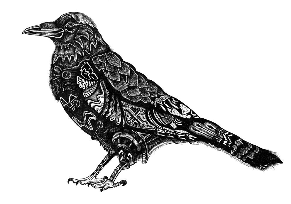 Line Drawing Raven : Paintings of crows and ravens drawings color