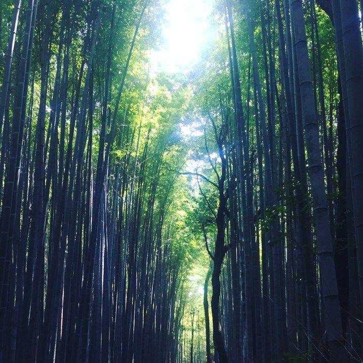 Spaziergang Durch Den Arashiyama Bambuswald Nahe Tokio Giraffes