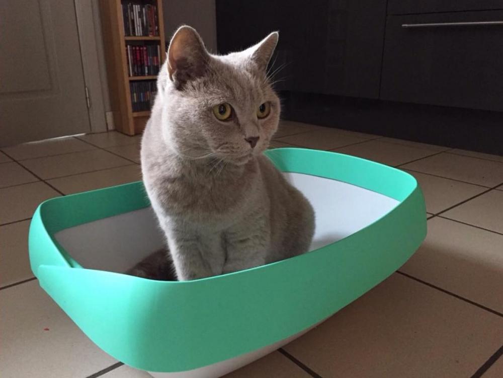 Best Cat Litter Box 2020 Best cat litter, Cat training