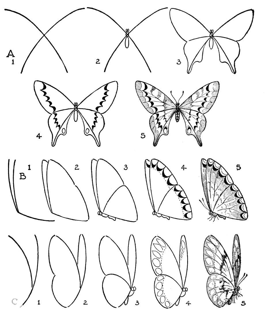 Jak Narysowac Szukaj W Google Butterfly Drawing Flower Drawing Tutorials Flower Drawing