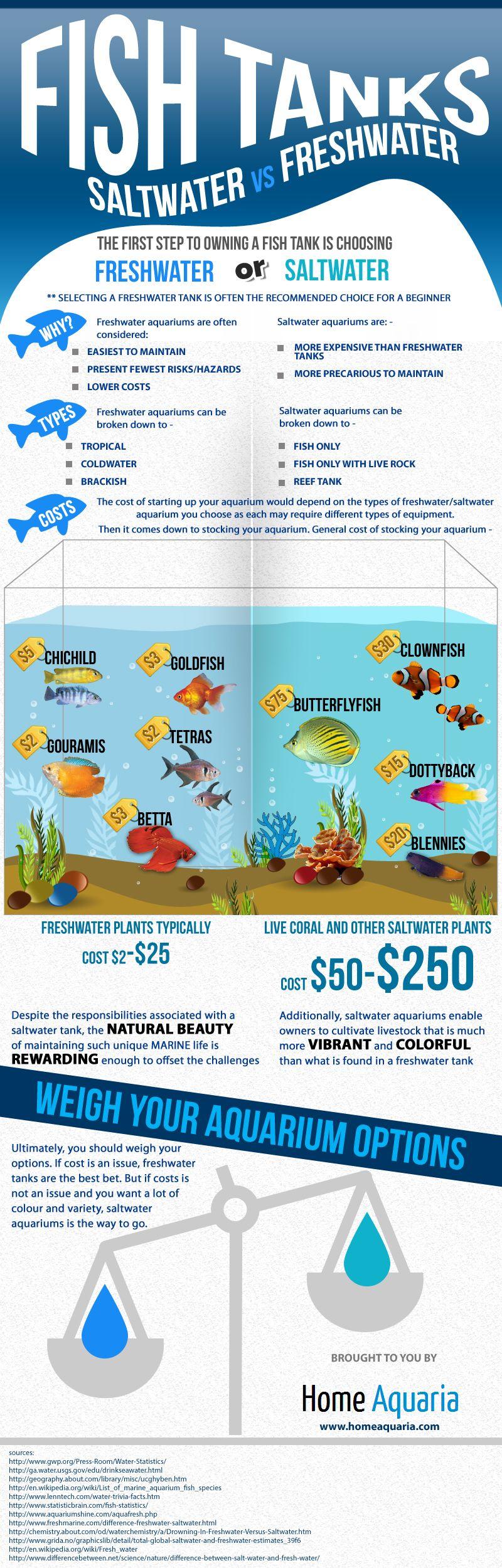 Angler Fish Saltwater Aquarium   Aquarium Fish   Pinterest   Angler Fish, Saltwater  Aquarium And Aquariums