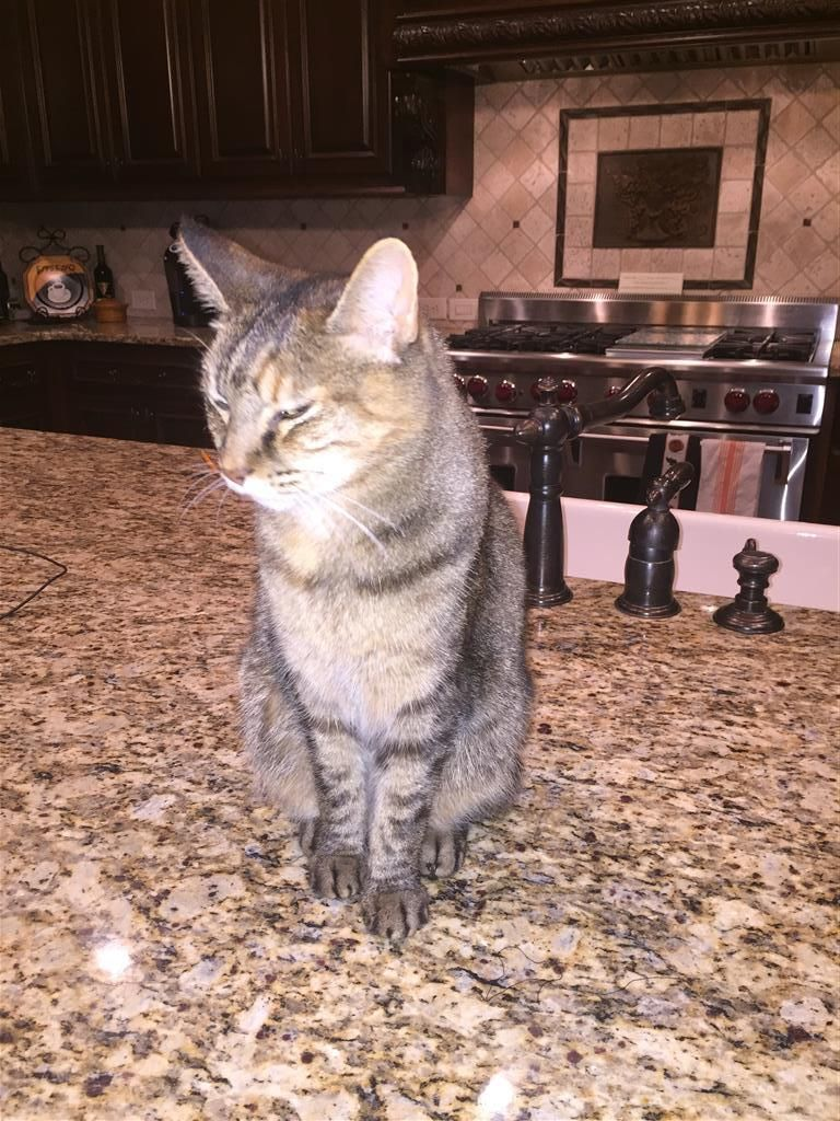 Pin by Lost Cats on February 2016 Lost/Found