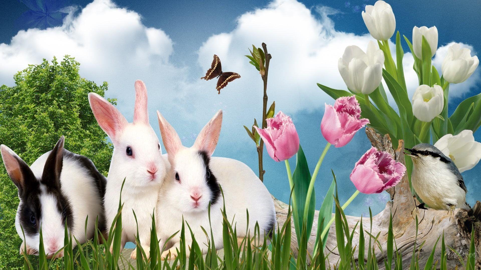Beautiful Spring Desktop Wallpaper Animals Large Bunny Wallpaper