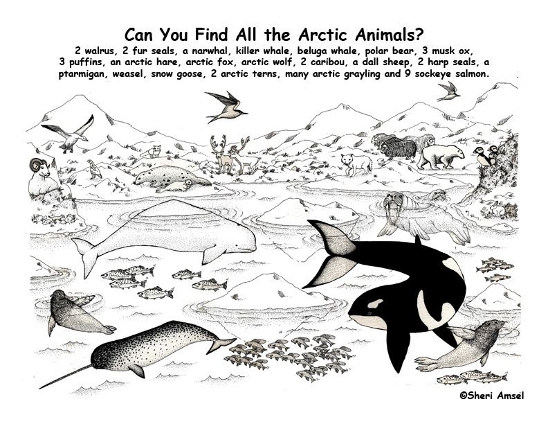Arctic Animal Coloring Pages Exploring Nature Educational Resource