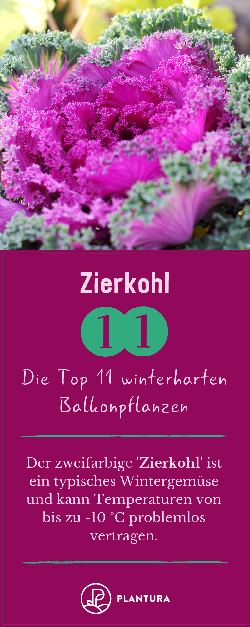 Winterharte Balkonpflanzen Die Top 11 Für Ihren Balkon
