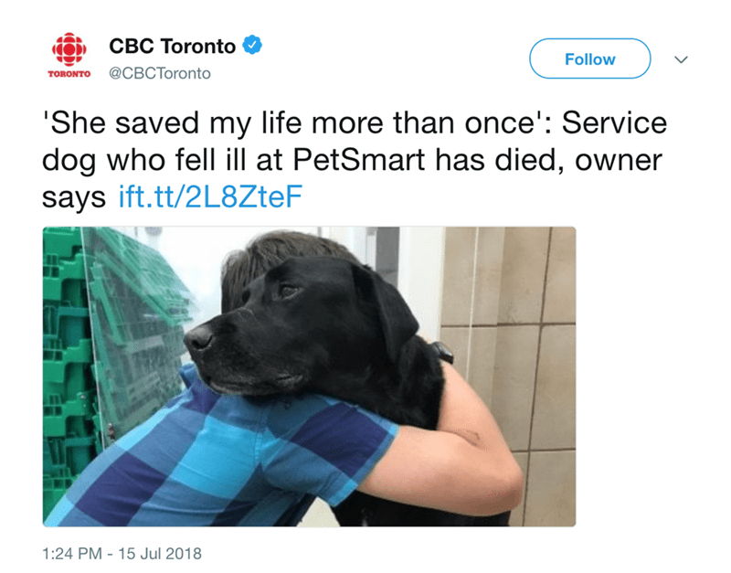 Youtuber's Service Dog Tragically Dies After Staying At