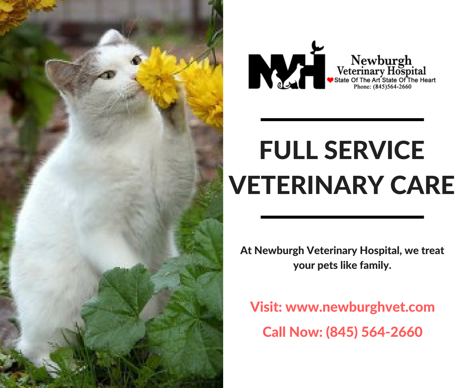 Bring Your Dog Cat Or Other Pet To The Newburgh Ny Veterinarian We Provide The Veterinary Services You Need For A Veterinary Hospital Pet Vet Animal Hospital