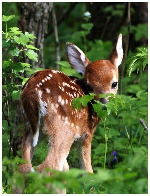 Sweet little fawn! We woke up one morning to a momma doe and little fawn nursing! She was near our little waterfall and the wooded area on the hill here in Southwest Virginia. God's creations.
