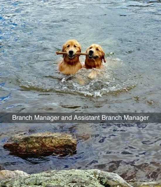 Branch Manager and Assistant Branch Manager Animal, Dog and Humor
