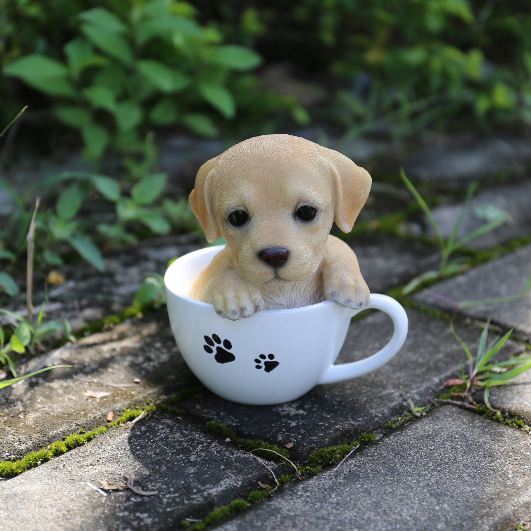Cup Hunde