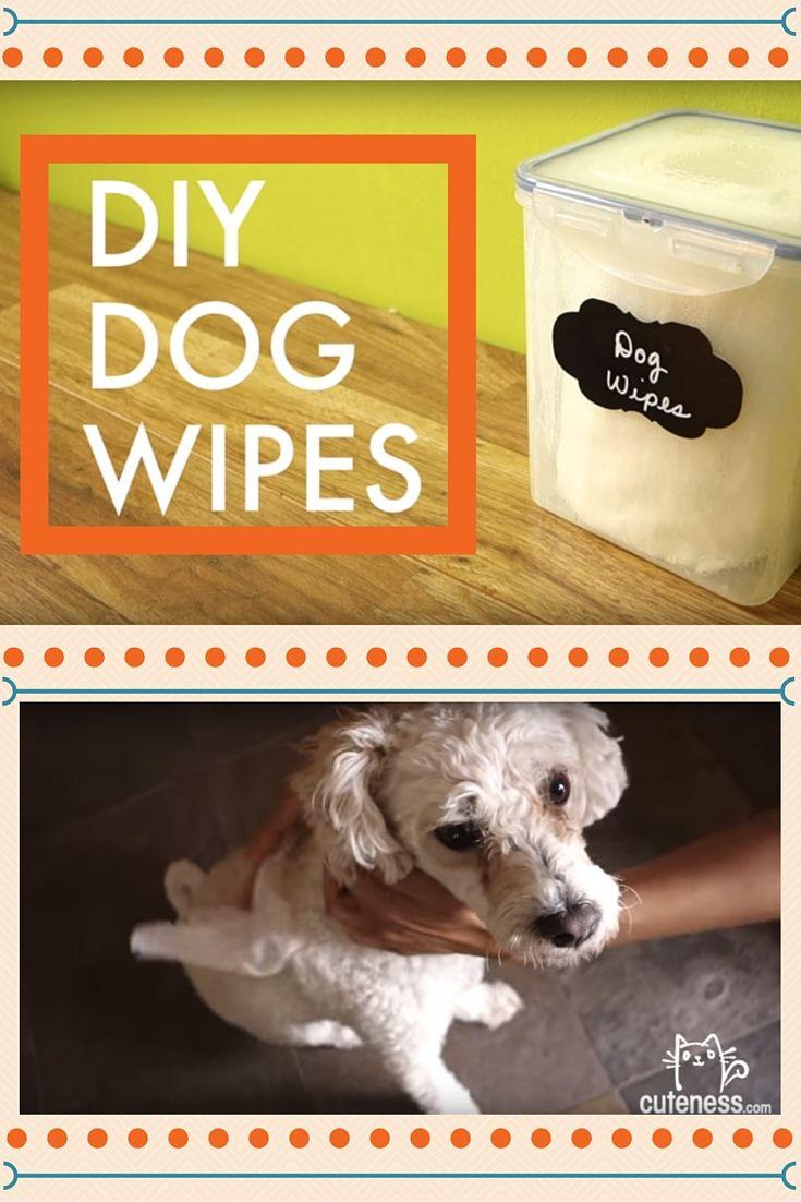 Video Homemade Dog Bath Wipes Diy Dog Stuff Diy Dog Wash