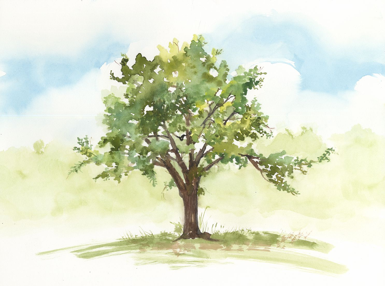 Watercolor, Walnut Tree, by Jake Marshall, 2015. | Watercolors ...