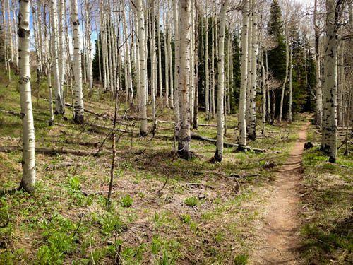 5 Beautiful Hikes in SLC area