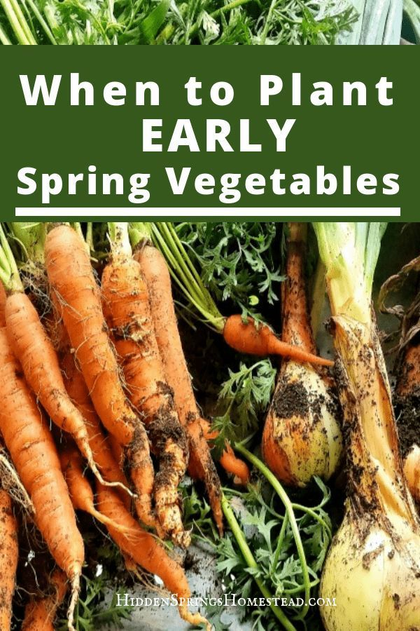When to Plant Early Spring Vegetables is part of Spring vegetable garden - In depth look at When to Plant Early Spring Vegetables  Planting guide and checklist  Detailed instructions how to plant spring vegetables
