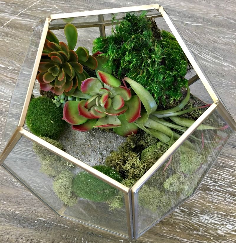 Prim and Propah DIY Terrariums with World Market