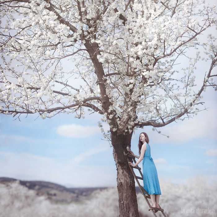 Photograph apple blossoms by Anka Zhuravleva on 500px