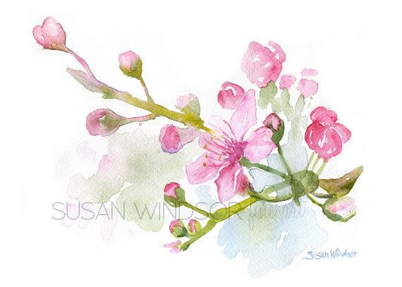 Cherry Blossoms aquarel schilderen 5 x 7 Giclee door SusanWindsor