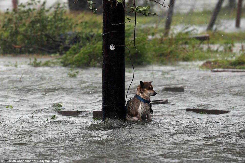 SAFE! DAILY MAIL RESCUES LUCKY, THE DOG WHO BROKE THE