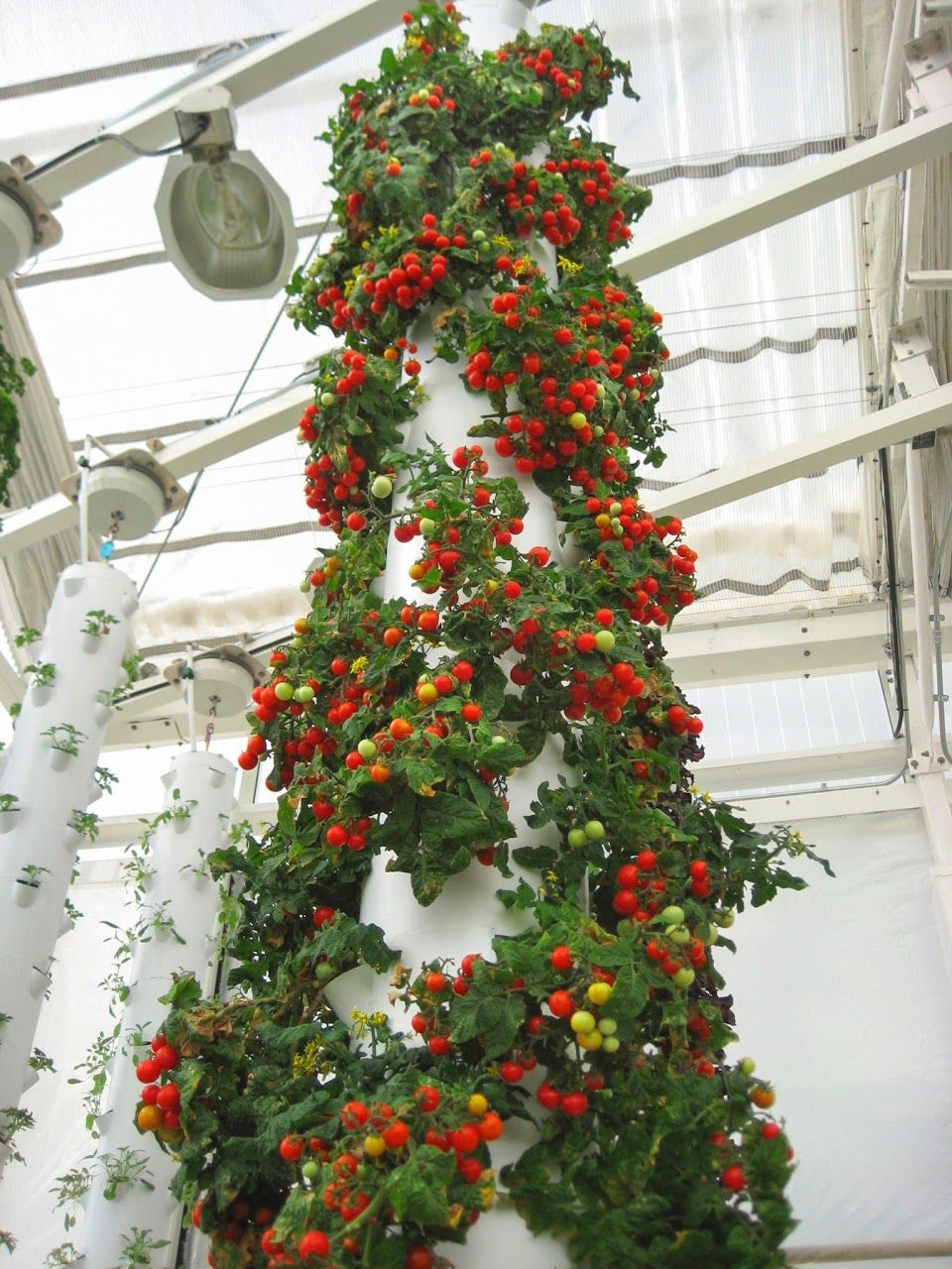 60 Tomato Plants Grown In A Single Tower Garden Http