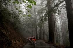 Cycling: Tour of California / Stage 3 Illustration Illustratie / Peleton Peloton / Forest Bois Bos / Fog Brouillard Mist / Landscape Paysage...