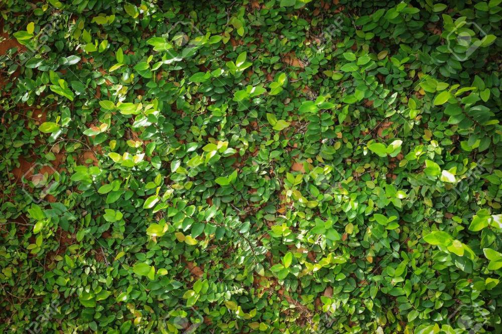 Green Leaf Texture Mural Wallpaper Leaf Texture Murals Your Way Mural