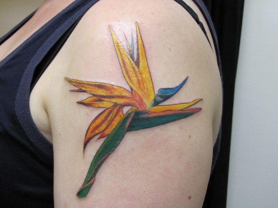 Pin by Janelle Rice on Tattooos Paradise tattoo, Bird of