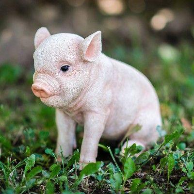6 Polyresin Sitting Baby Pig Statue Pink Hi Line Gift Baby Pigs Baby Animals Funny Baby Animals