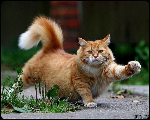 Ley de gato Estiramiento: Un gato se extenderá a una distancia proporcional a la longitud de la siesta acaba de tomar.