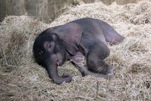 How Nature Does Sleeping Sleeping Animals Elephant Elephant Facts