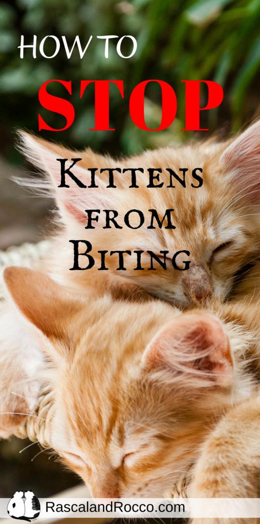 How To Stop Kittens From Biting Cat Behavior Kitten Biting Cat Training