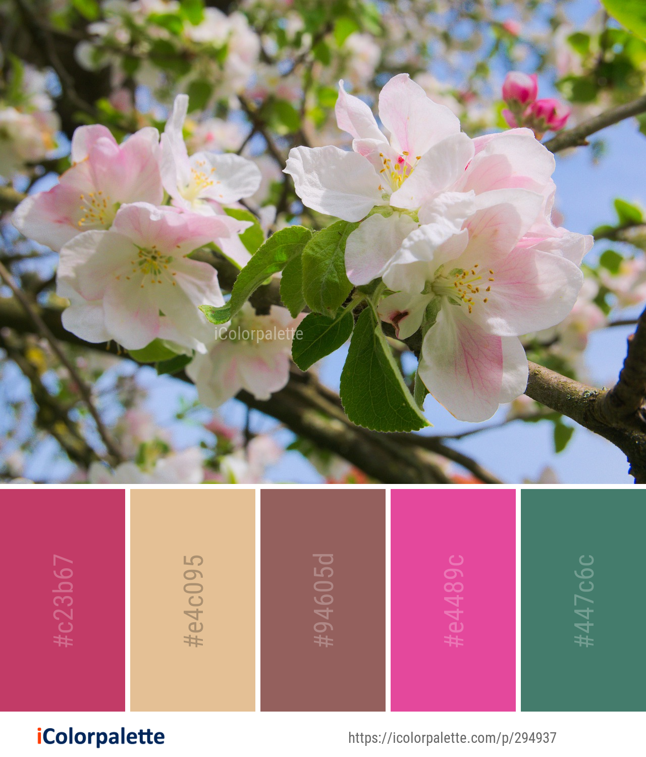 Color Palette Ideas From 1806 Blossom Images Icolorpalette Spring Color Palette Color Palette Color