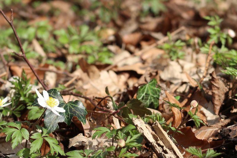 Frühling in der Eilenriede #hannover #hedyundolaf
