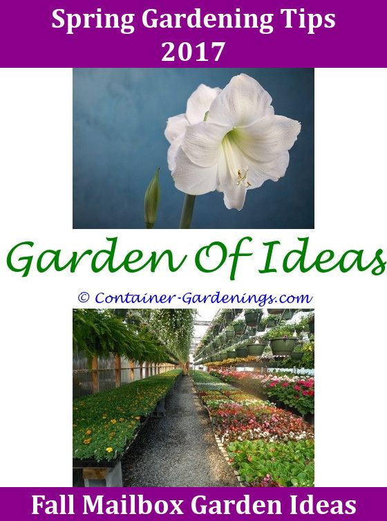 Pin By Rock Garden Ideas On School Garden Ideas Pinterest