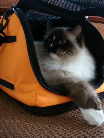 Sleepy Pod Best Cat Litter Cat Collars Ragdoll Cat