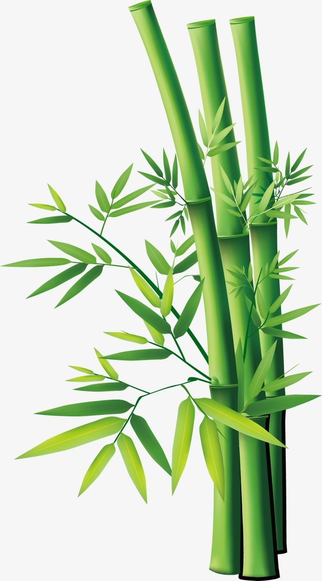 cartoon bamboo, bamboo clipart, cute cartoon png transparent clipart image  and psd file for free download | bamboo drawing, bamboo art, bamboo  background  pinterest
